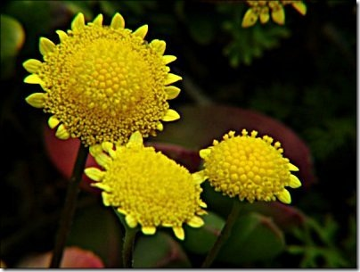 2004-09-25_tiny_yellow_flowers