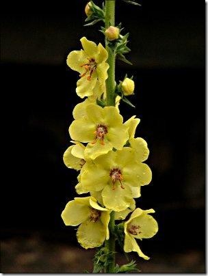 2004-10-17_yellow_flower